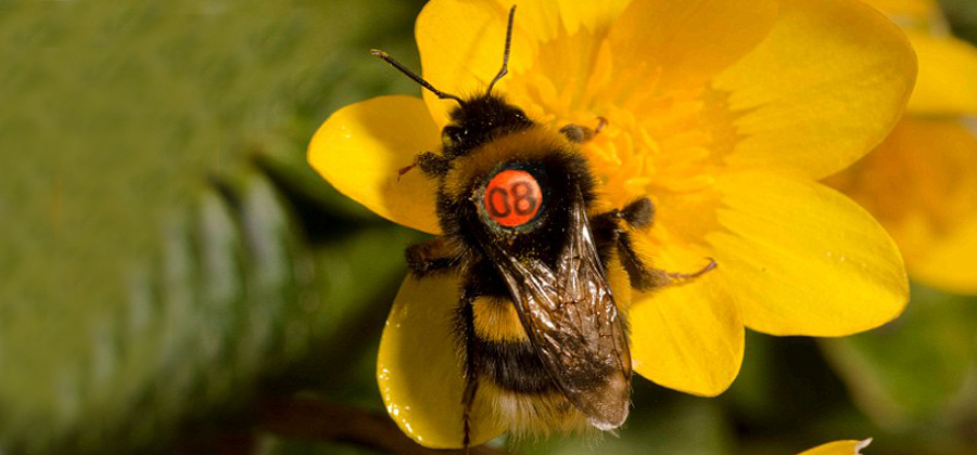 Will You Spot The Numbered Bees in London?